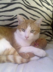 Our sweet Stanley with his beloved Gingerbread man.  So cute!
