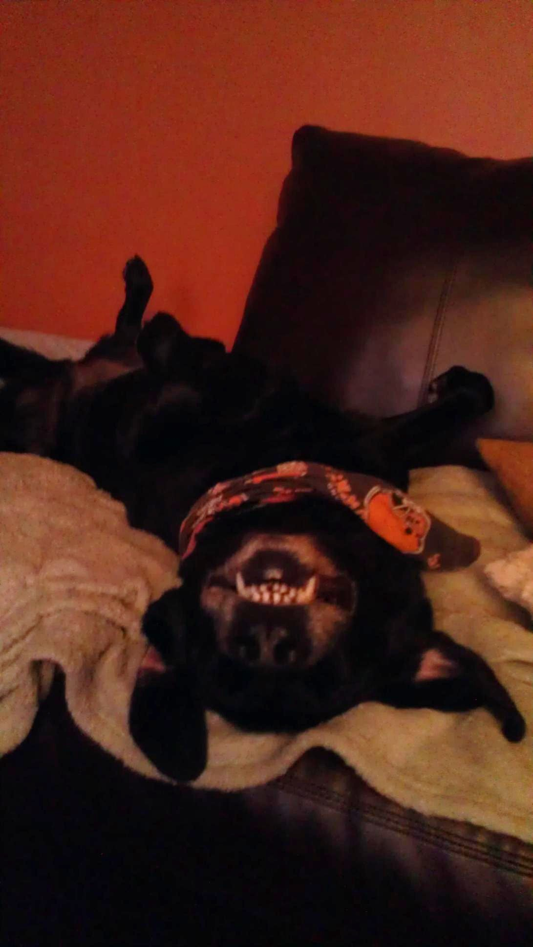 Weekly Pet Pic: An Upside Down Smiling Halloween Hound