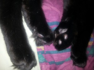 fig-paws