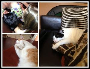 nap cats