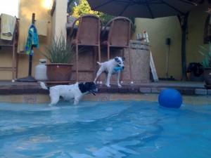 swim dogs