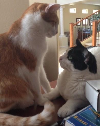 cats conversing