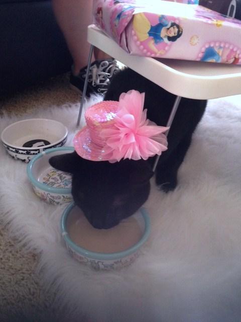 Make her wear a birthday hat!