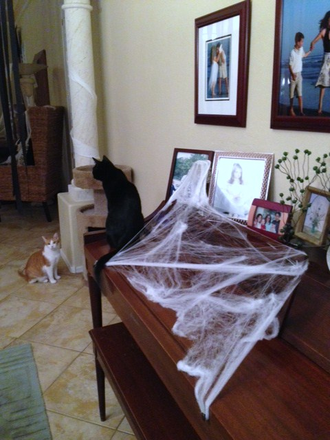 Spider web spread across the piano.  Our black kitty was an accidental addition when we snapped the pic!