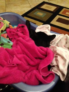 Lucy jumped in the basket and arranged the towels herself so that she was swaddled like a baby!