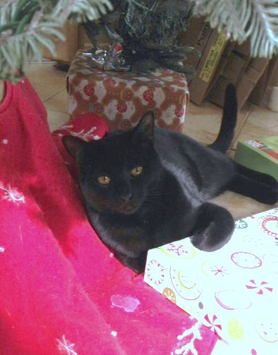 Once the gifts were placed under the tree, Lucy let us know that one of those gifts had to be her.
