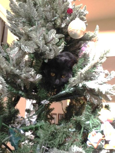 tree cat climb