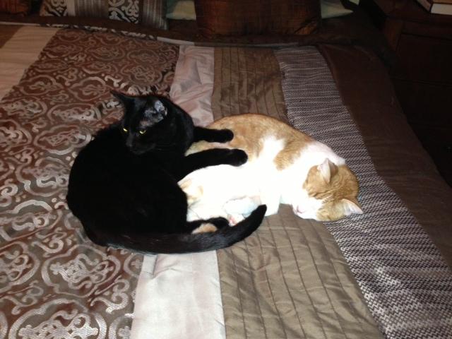 cat massage
