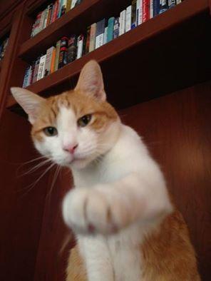 cat stan