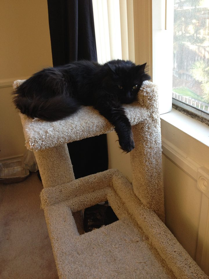 shadow on cat tree