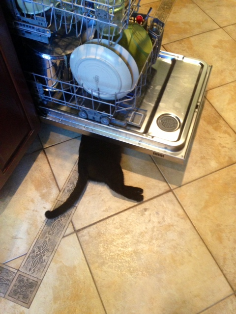 silly Lucy dish washer