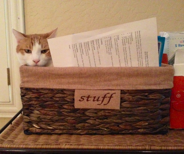 stan in stuff basket