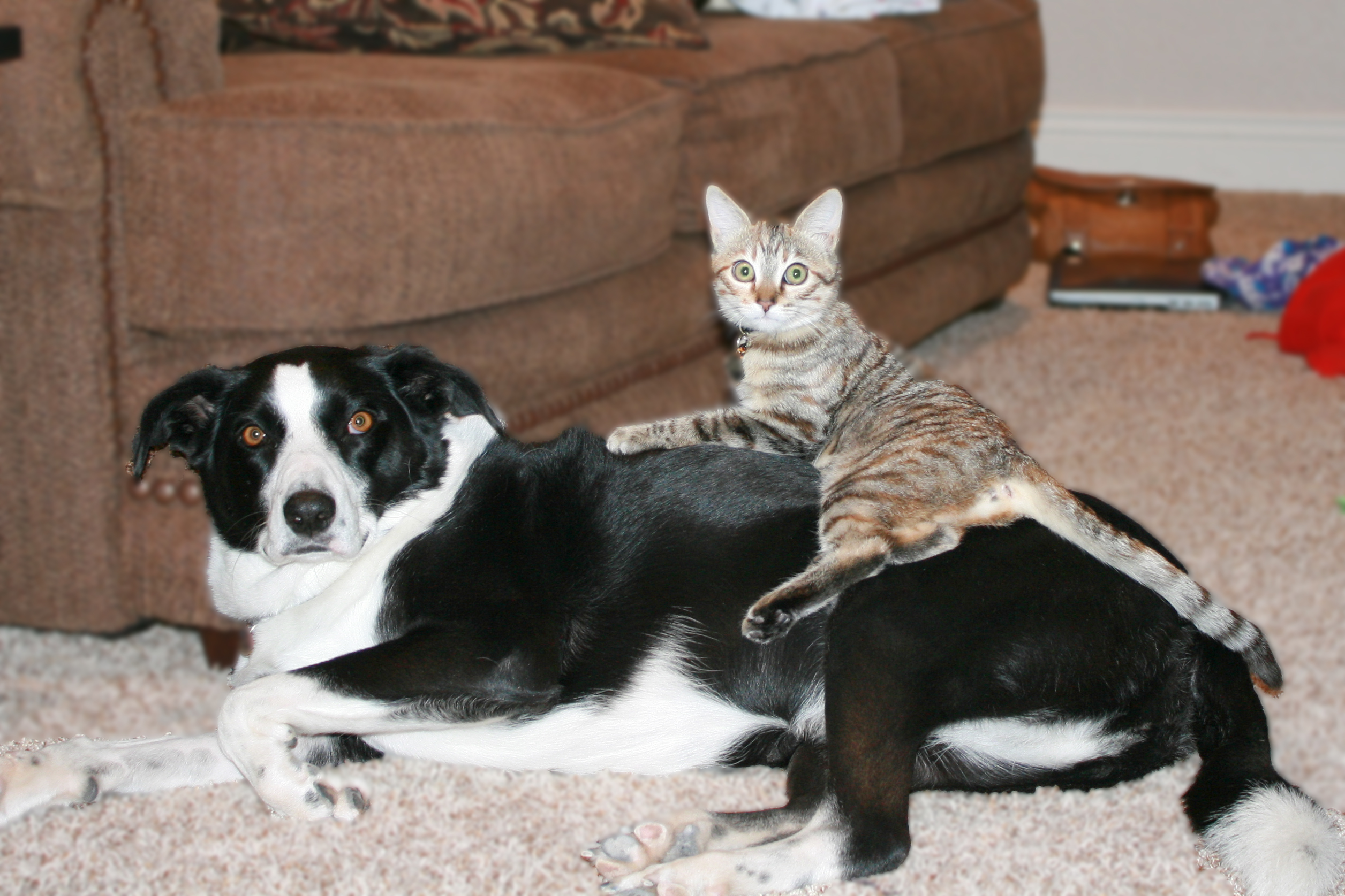Weekly Pet Pic Two Cool Cats Amp One Nice Dog