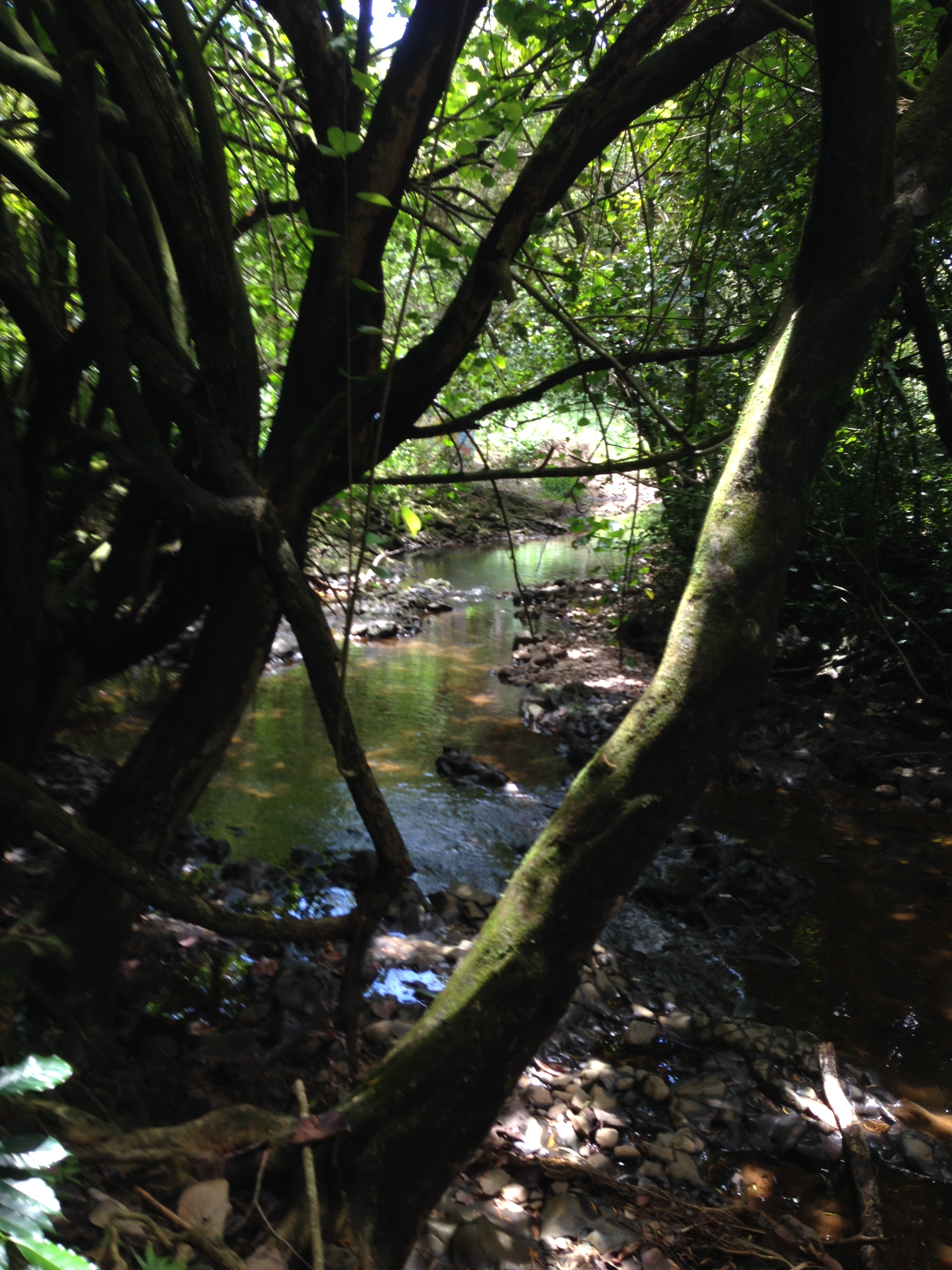 maui hike creek